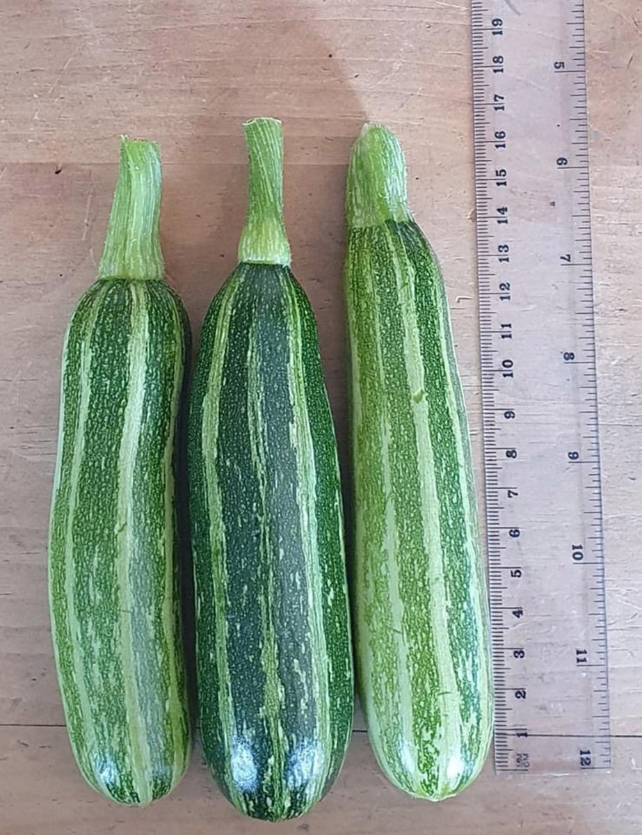 Sheila-Andrews-courgettes